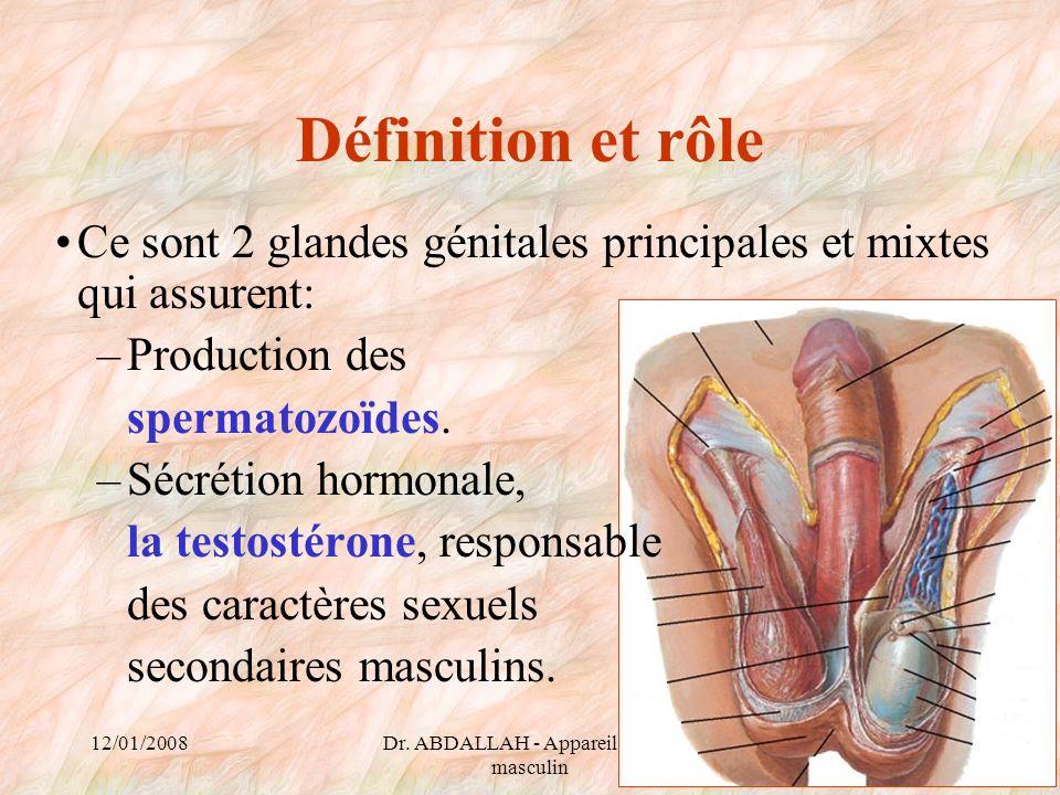 12/01/2008Dr. ABDALLAH - Appareil génital masculin 9 Définition et rôle Ce sont 2 glandes génitales principales et mixtes qui assurent: –Production de