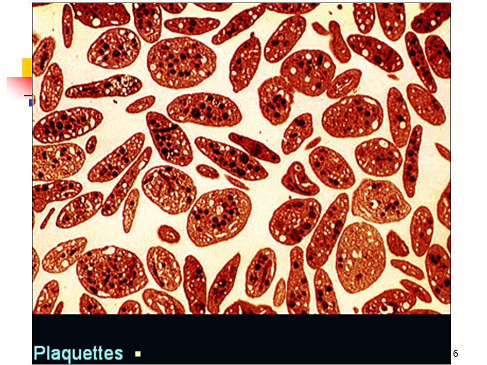 08/01/2008 Dr. ABDALLAH - Appareil circulatoire37