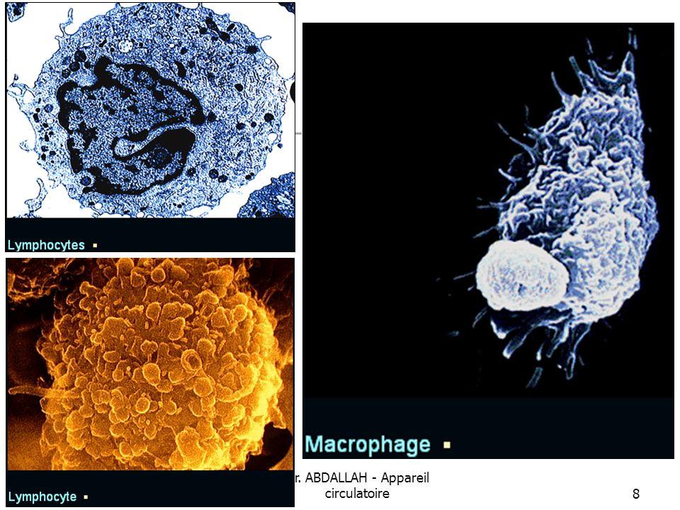 08/01/2008 Dr. ABDALLAH - Appareil circulatoire39 Varices