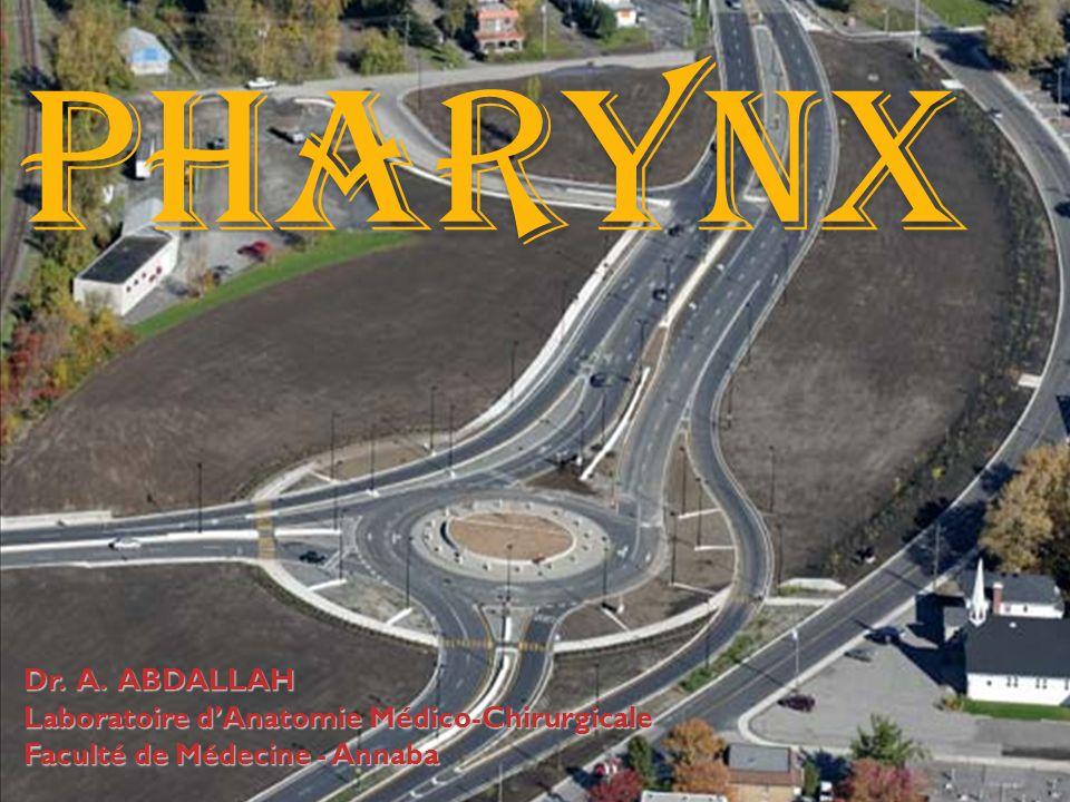 01/04/2008Dr. ABDALLAH- Pharynx12