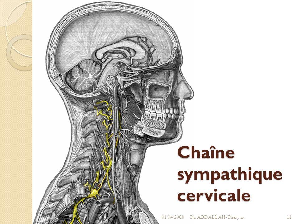 Chaîne sympathique cervicale 01/04/2008Dr. ABDALLAH- Pharynx11
