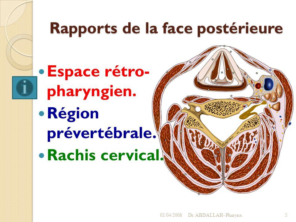 Rapports de la face postérieure Espace rétro- pharyngien. Région prévertébrale. Rachis cervical. 01/04/2008Dr. ABDALLAH- Pharynx5