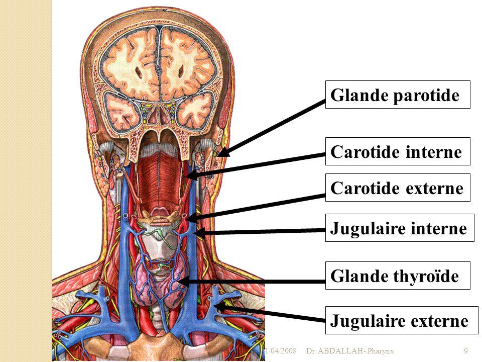 01/04/2008Dr. ABDALLAH- Pharynx9 Glande parotide Carotide externe Carotide interne Jugulaire interne Jugulaire externe Glande thyroïde
