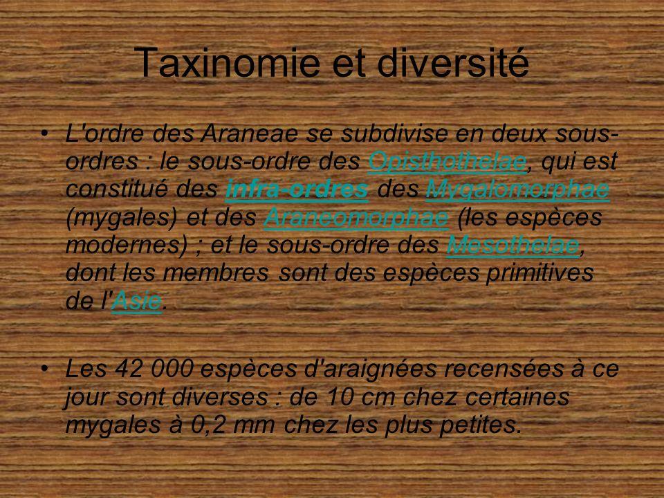 Taxinomie et diversité L ordre des Araneae se subdivise en deux sous- ordres : le sous-ordre des Opisthothelae, qui est constitué des infra-ordres des Mygalomorphae (mygales) et des Araneomorphae (les espèces modernes) ; et le sous-ordre des Mesothelae, dont les membres sont des espèces primitives de l Asie.Opisthothelaeinfra-ordresMygalomorphaeAraneomorphaeMesothelaeAsie Les 42 000 espèces d araignées recensées à ce jour sont diverses : de 10 cm chez certaines mygales à 0,2 mm chez les plus petites.