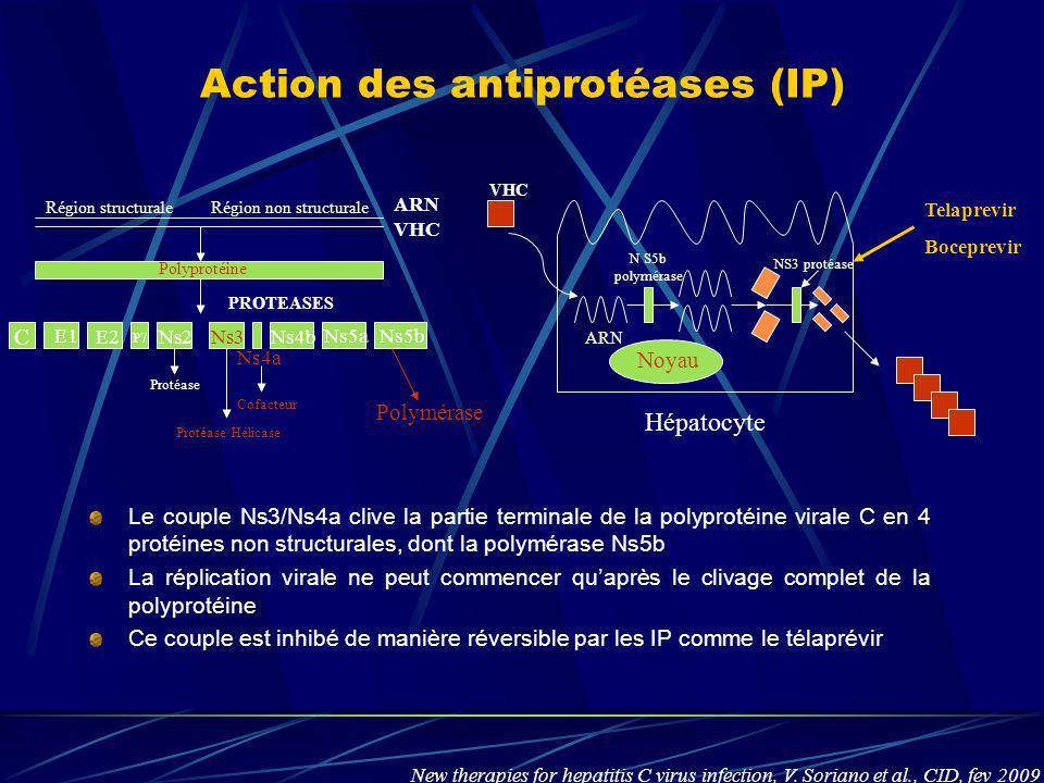 Action des antiprotéases (IP) Le couple Ns3/Ns4a clive la partie terminale de la polyprotéine virale C en 4 protéines non structurales, dont la polymé