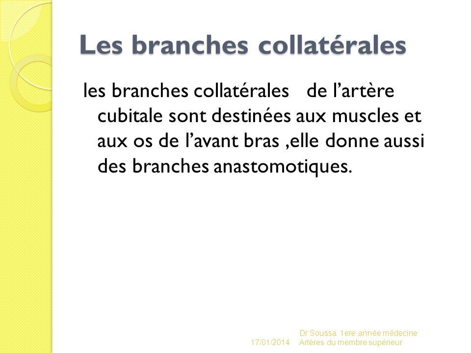 Les branches collatérales Les branches collatérales les branches collatérales de lartère cubitale sont destinées aux muscles et aux os de lavant bras,