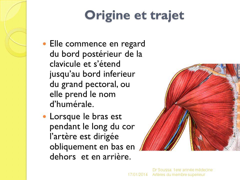 Origine et trajet Origine et trajet Elle commence en regard du bord postérieur de la clavicule et sétend jusquau bord inferieur du grand pectoral, ou
