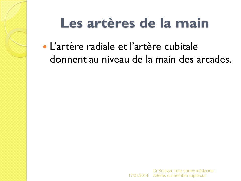 Les artères de la main Les artères de la main Lartère radiale et lartère cubitale donnent au niveau de la main des arcades. 17/01/2014 Dr Soussa 1ere