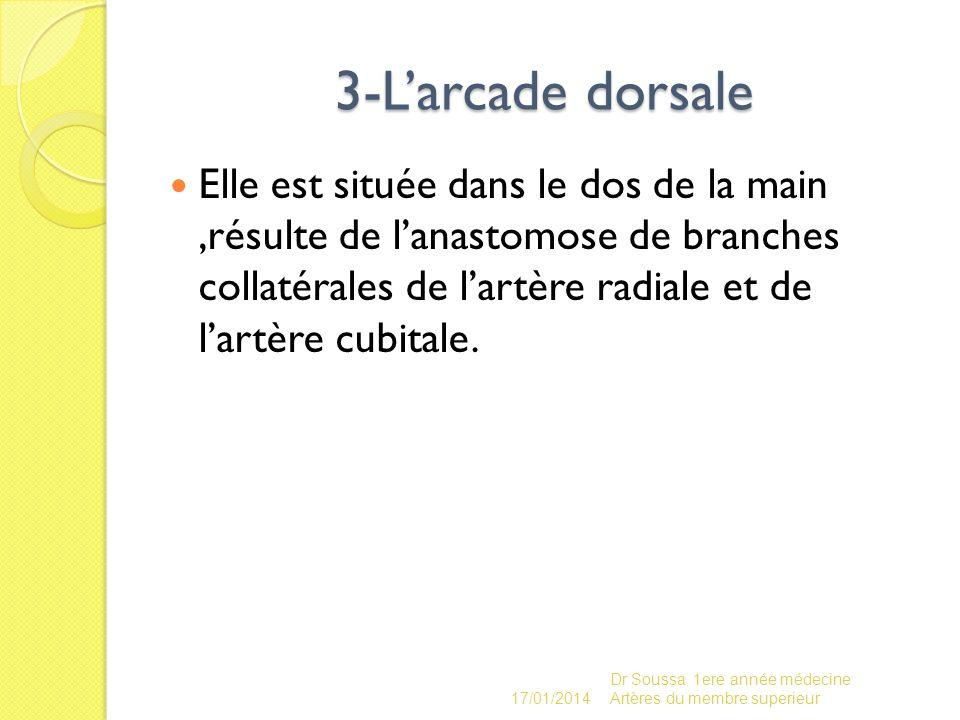 3-Larcade dorsale Elle est située dans le dos de la main,résulte de lanastomose de branches collatérales de lartère radiale et de lartère cubitale. 17