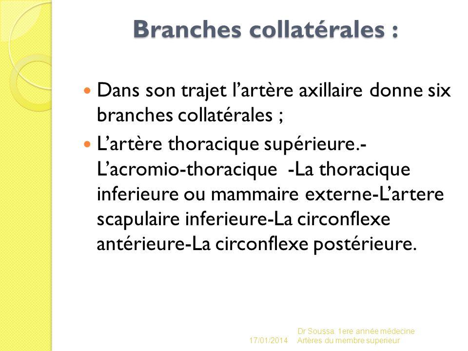 Branches collatérales : Dans son trajet lartère axillaire donne six branches collatérales ; Lartère thoracique supérieure.- Lacromio-thoracique -La th