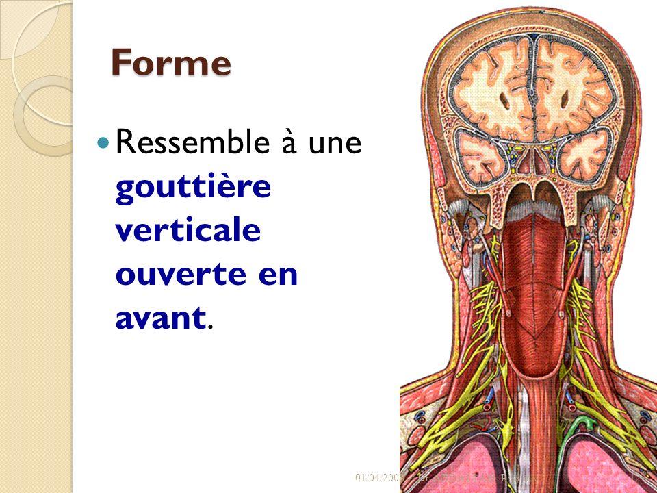 Forme Ressemble à une gouttière verticale ouverte en avant. 01/04/2008Dr. ABDALLAH- Pharynx12