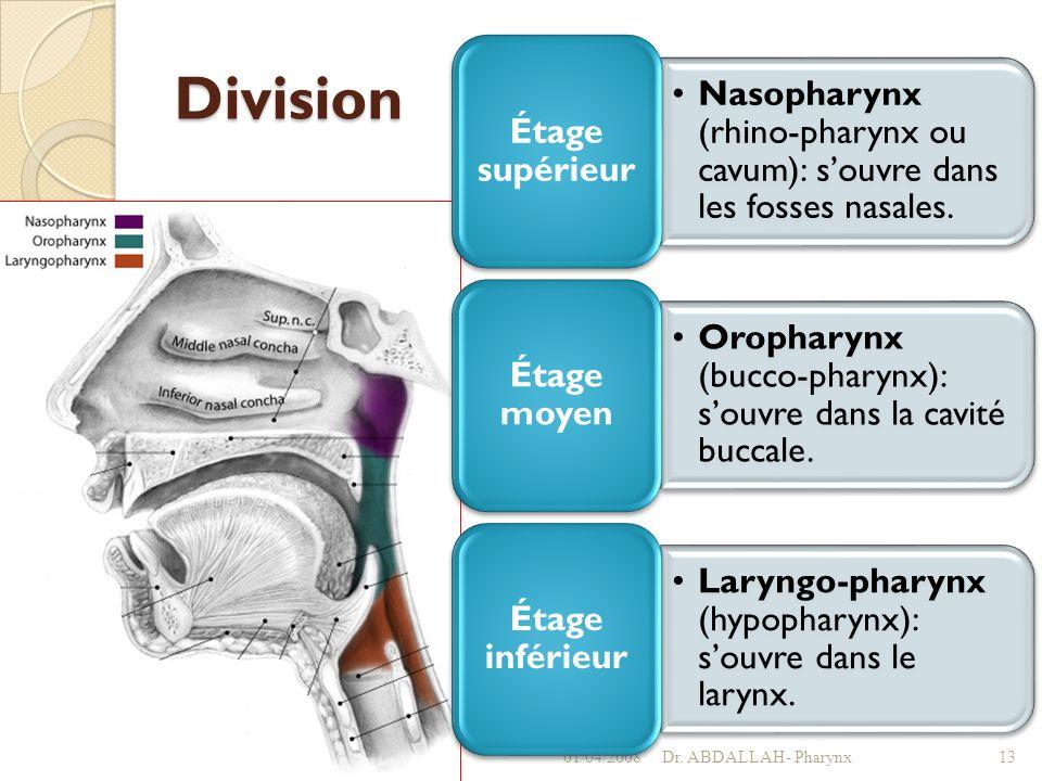 Division 01/04/2008Dr. ABDALLAH- Pharynx13