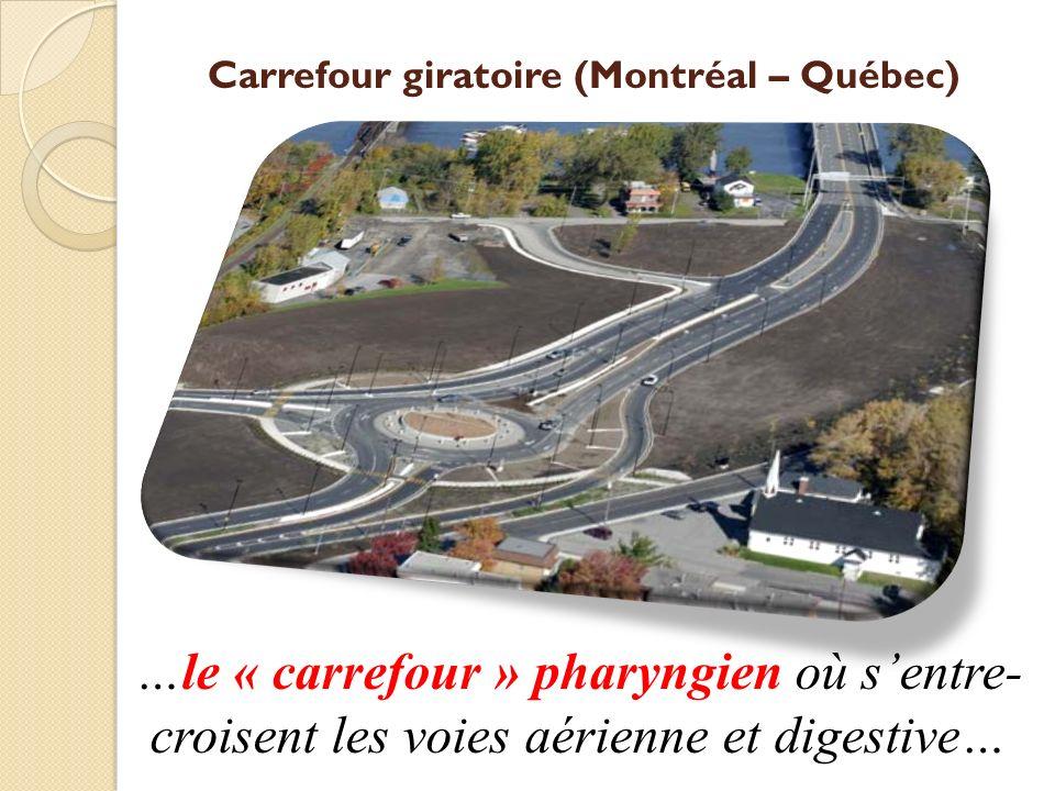 Carrefour giratoire (Montréal – Québec) …le « carrefour » pharyngien où sentre- croisent les voies aérienne et digestive…