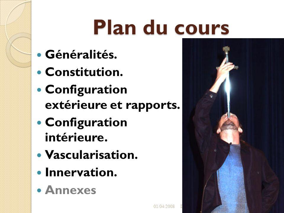 Plan du cours Généralités. Constitution. Configuration extérieure et rapports. Configuration intérieure. Vascularisation. Innervation. Annexes 01/04/2