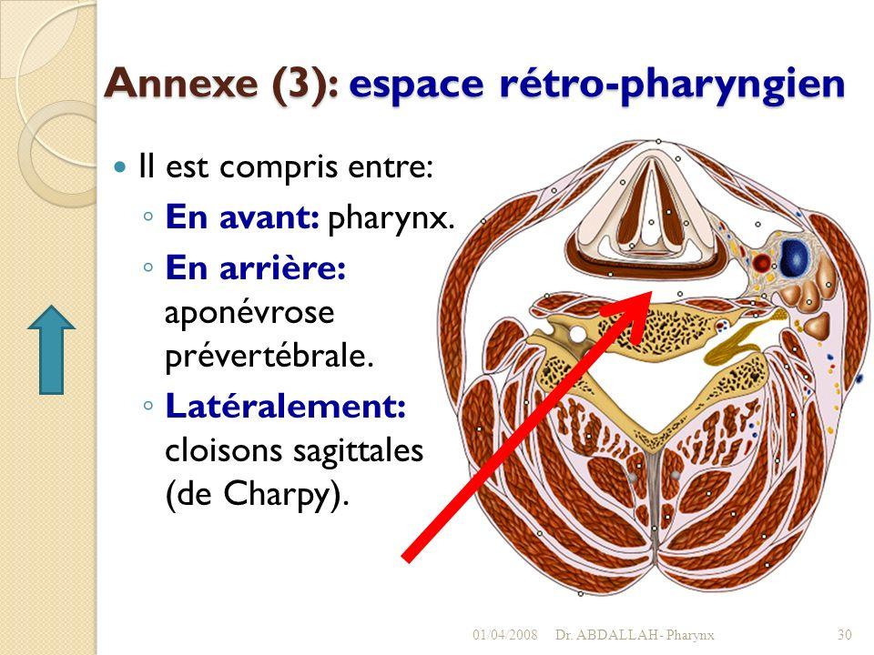 Annexe (3): espace rétro-pharyngien Il est compris entre: En avant: pharynx. En arrière: aponévrose prévertébrale. Latéralement: cloisons sagittales (