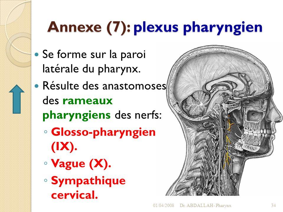 Annexe (7): plexus pharyngien Se forme sur la paroi latérale du pharynx. Résulte des anastomoses des rameaux pharyngiens des nerfs: Glosso-pharyngien