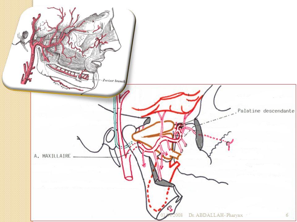 01/04/2008Dr. ABDALLAH- Pharynx27