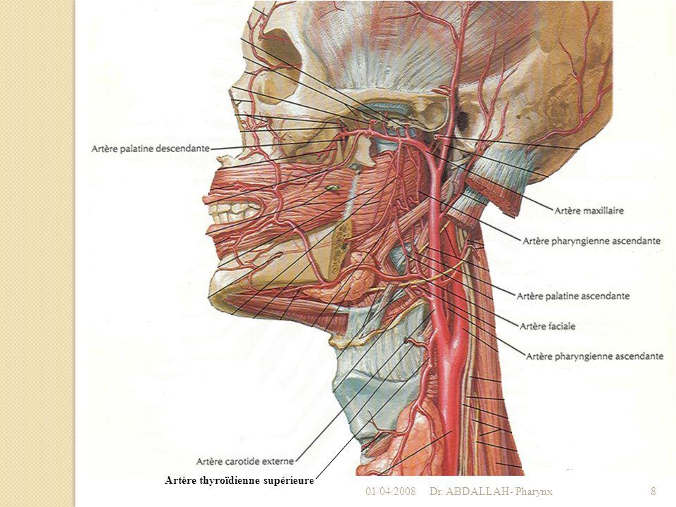 Veines Se drainent par les veines pharyngiennes.Se jettent dans la veine jugulaire interne.