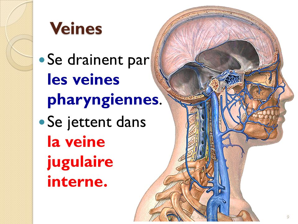 Veines Se drainent par les veines pharyngiennes. Se jettent dans la veine jugulaire interne. 01/04/2008Dr. ABDALLAH- Pharynx9