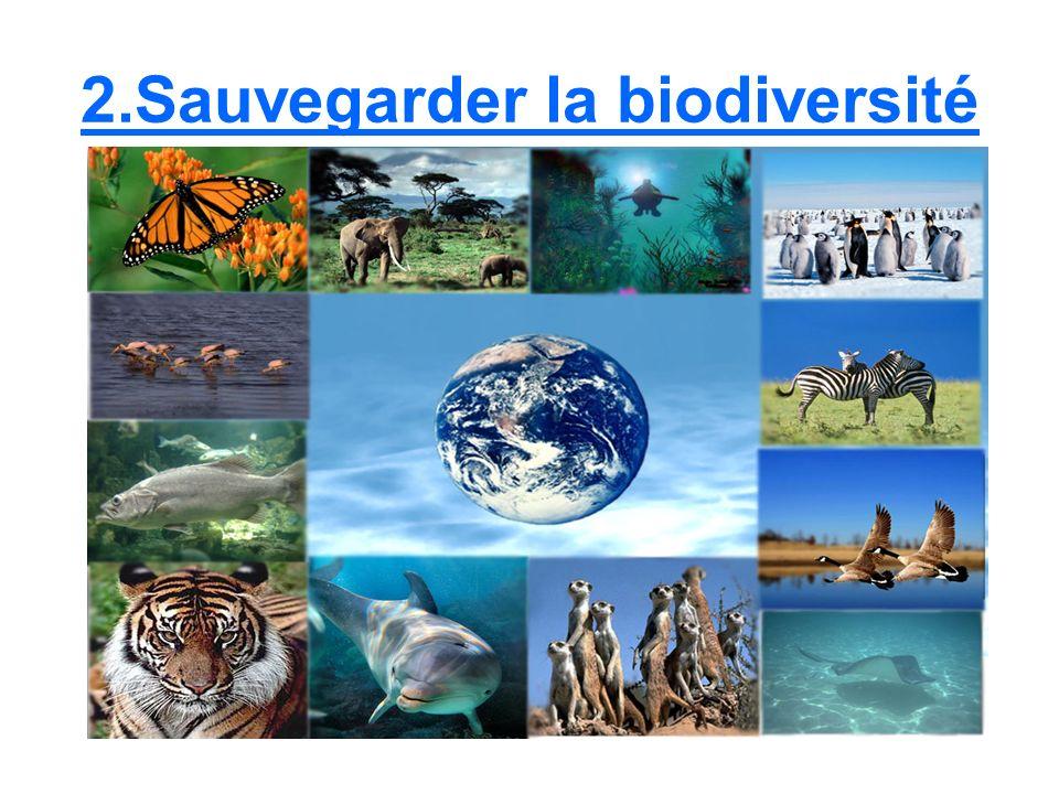 Quest ce que la biodiversité.La biodiversité, cest la contraction de biologique et de diversité.