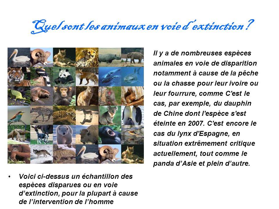 Quel sont les animaux en voie dextinction? Il y a de nombreuses espèces animales en voie de disparition notamment à cause de la pêche ou la chasse pou