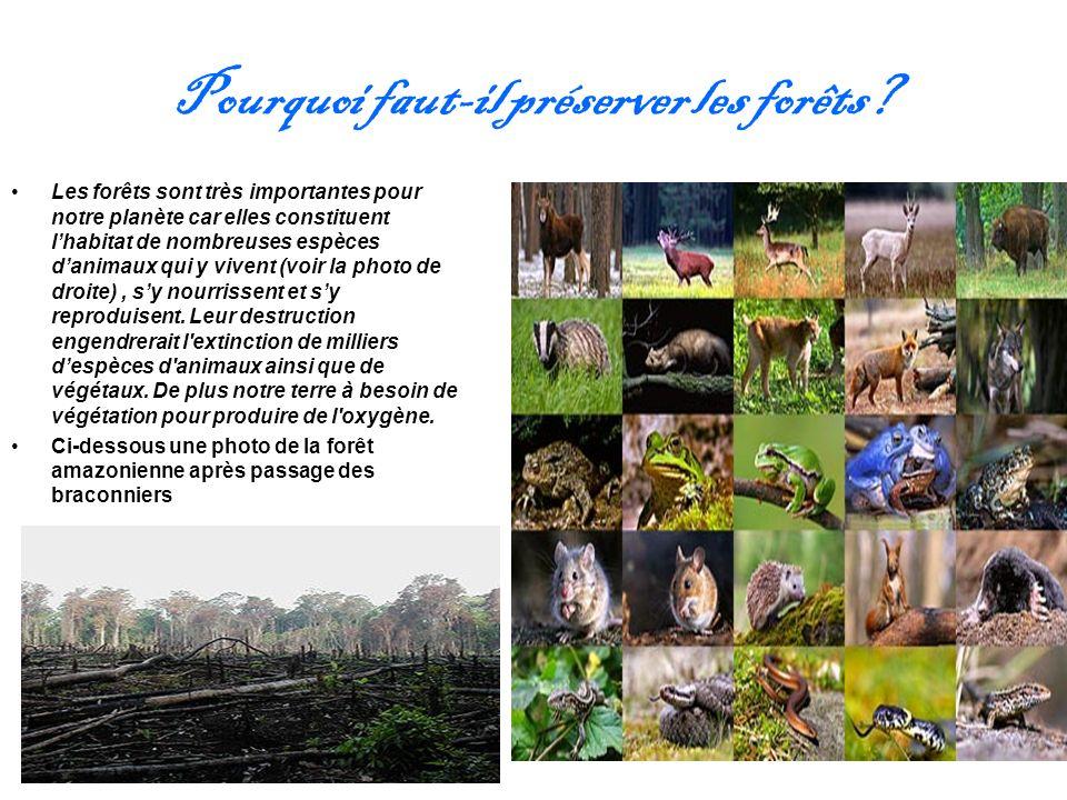 Pourquoi faut-il préserver les forêts? Les forêts sont très importantes pour notre planète car elles constituent lhabitat de nombreuses espèces danima