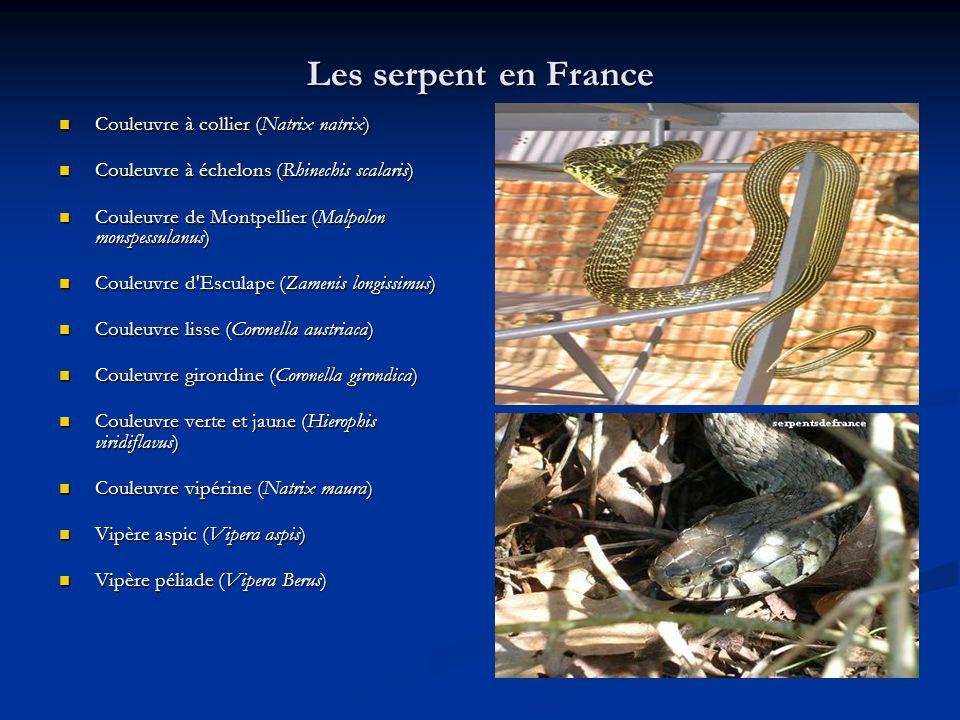 Les serpent en France Couleuvre à collier (Natrix natrix) Couleuvre à collier (Natrix natrix) Couleuvre à échelons (Rhinechis scalaris) Couleuvre à éc