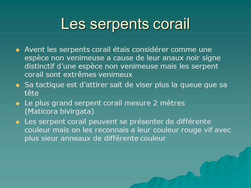 Les serpents corail Avent les serpents corail étais considérer comme une espèce non venimeuse a cause de leur anaux noir signe distinctif dune espèce
