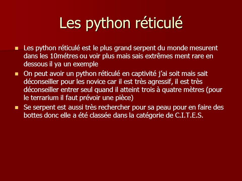 Les python réticulé Les python réticulé est le plus grand serpent du monde mesurent dans les 10métres ou voir plus mais sais extrêmes ment rare en des