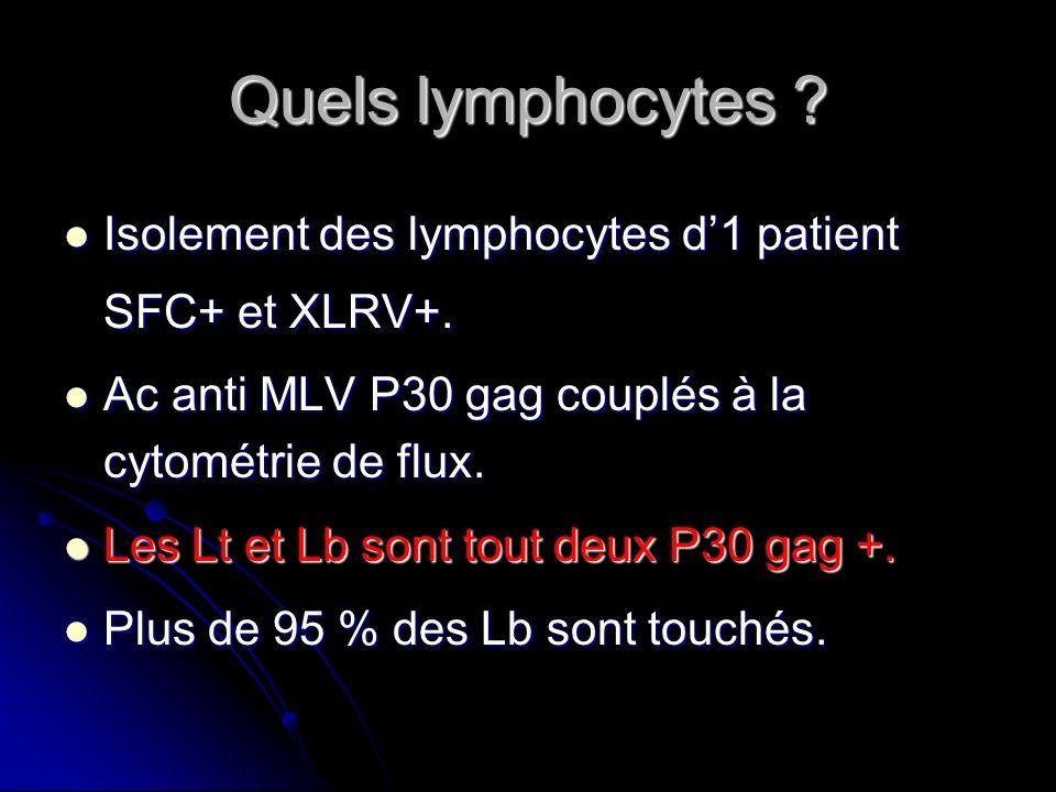 Quels lymphocytes ? Isolement des lymphocytes d1 patient SFC+ et XLRV+. Isolement des lymphocytes d1 patient SFC+ et XLRV+. Ac anti MLV P30 gag couplé