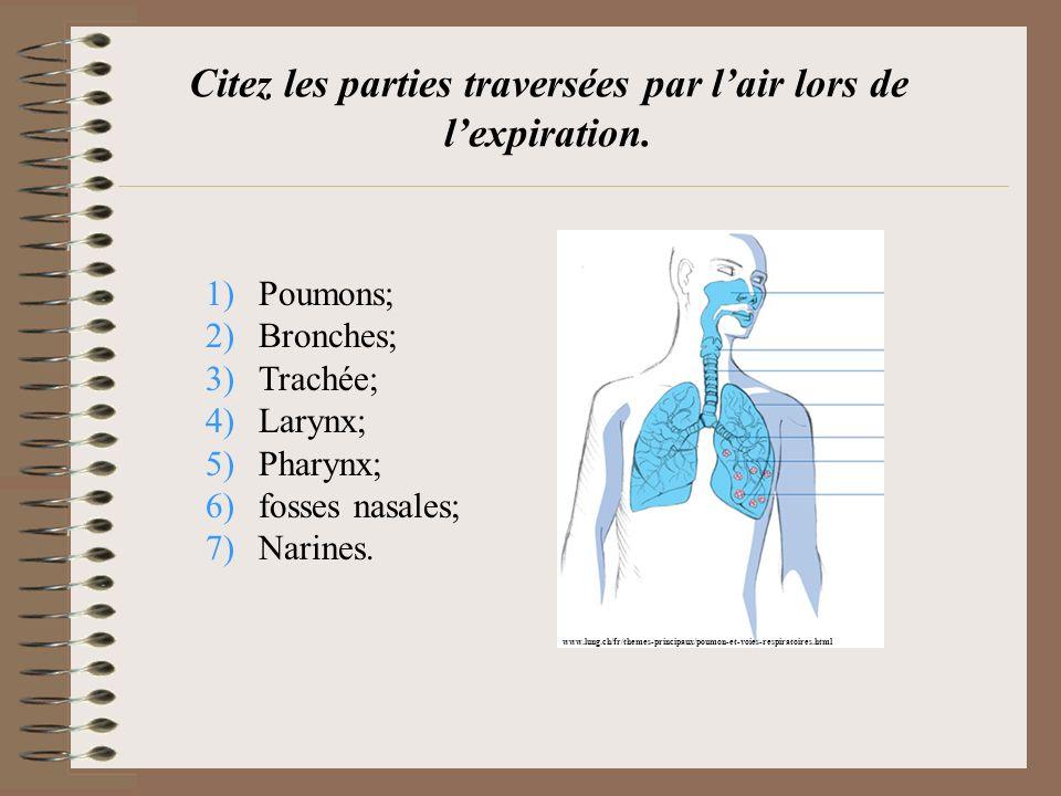Citez les parties traversées par lair lors de lexpiration. 1)Poumons; 2)Bronches; 3)Trachée; 4)Larynx; 5)Pharynx; 6)fosses nasales; 7)Narines. www.lun