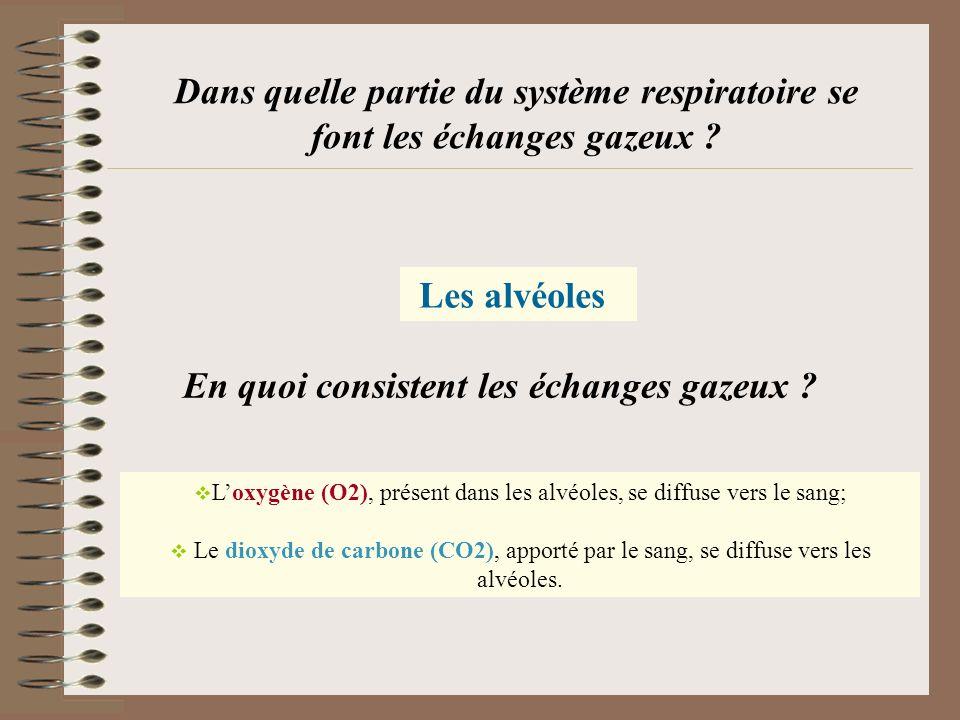 Dans quelle partie du système respiratoire se font les échanges gazeux ? Les alvéoles Loxygène (O2), présent dans les alvéoles, se diffuse vers le san