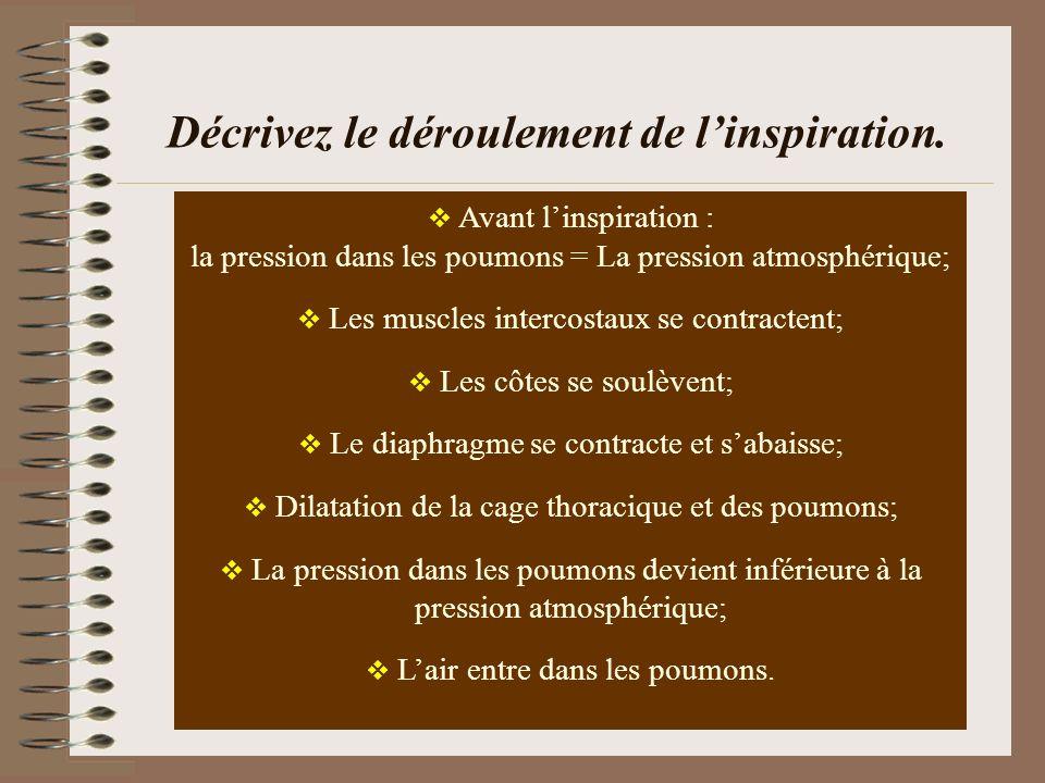 Décrivez le déroulement de linspiration. Avant linspiration : la pression dans les poumons = La pression atmosphérique; Les muscles intercostaux se co