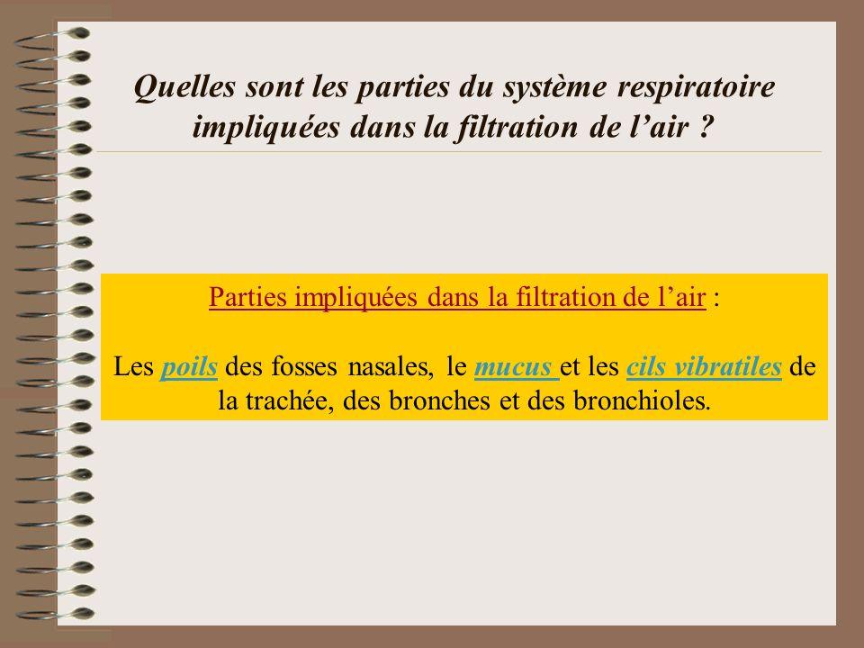 Quelles sont les parties du système respiratoire impliquées dans la filtration de lair ? Parties impliquées dans la filtration de lair : Les poils des
