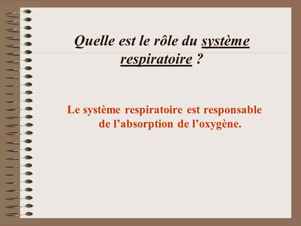 Quelle est le rôle du système respiratoire ? Le système respiratoire est responsable de labsorption de loxygène.