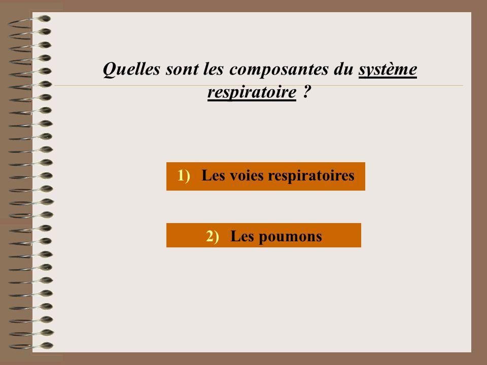 Quelles sont les composantes du système respiratoire ? 1)Les voies respiratoires 2)Les poumons