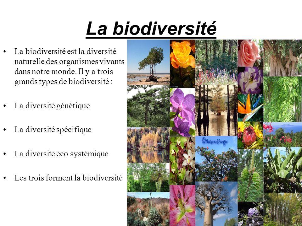La biodiversité La biodiversité est la diversité naturelle des organismes vivants dans notre monde. Il y a trois grands types de biodiversité : La div