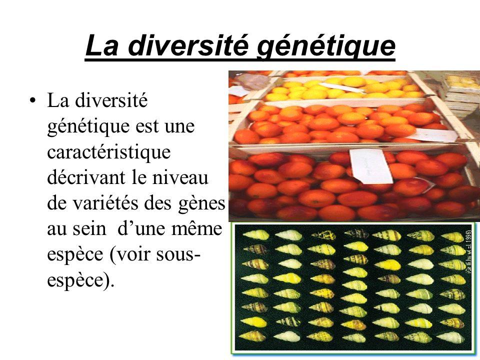 La diversité génétique La diversité génétique est une caractéristique décrivant le niveau de variétés des gènes au sein dune même espèce (voir sous- e