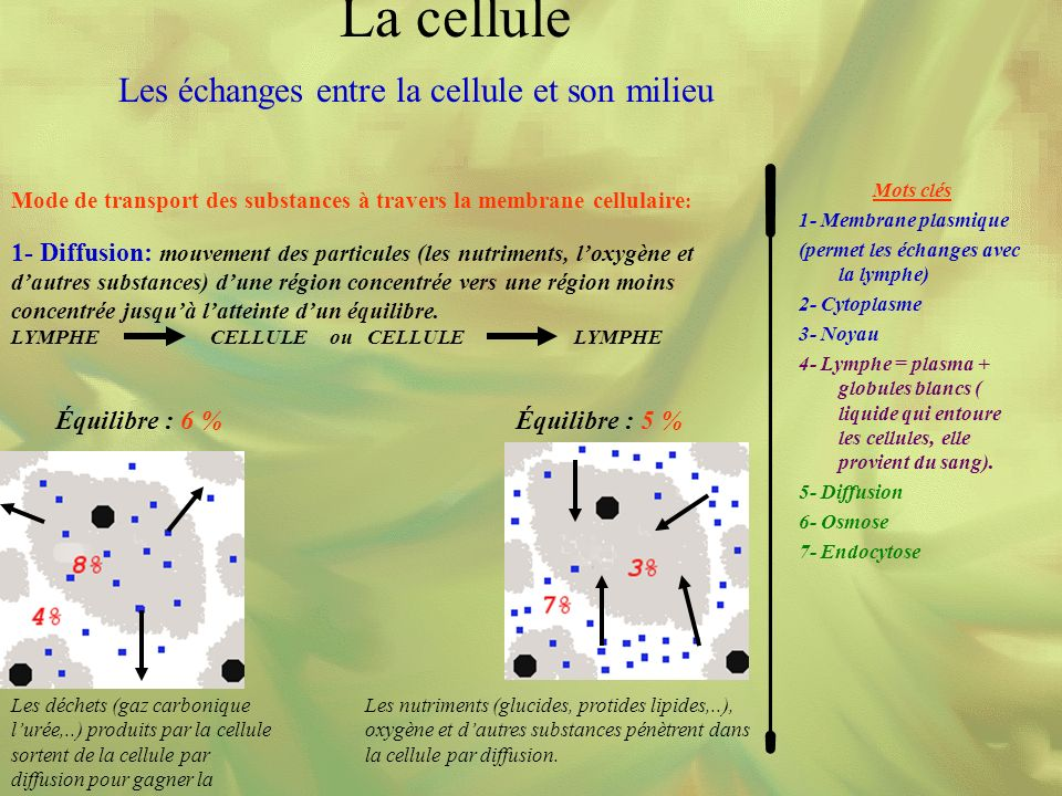 Mode de transport des substances à travers la membrane cellulaire : Mots clés 1- Membrane plasmique (permet les échanges avec la lymphe) 2- Cytoplasme 3- Noyau 4- Lymphe = plasma + globules blancs ( liquide qui entoure les cellules, elle provient du sang).
