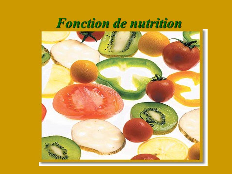 Fonction de nutrition