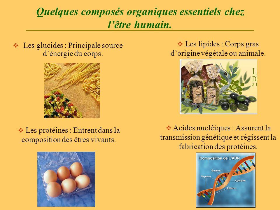 Quelques composés organiques essentiels chez lêtre humain. Les glucides : Principale source dénergie du corps. Les lipides : Corps gras dorigine végét