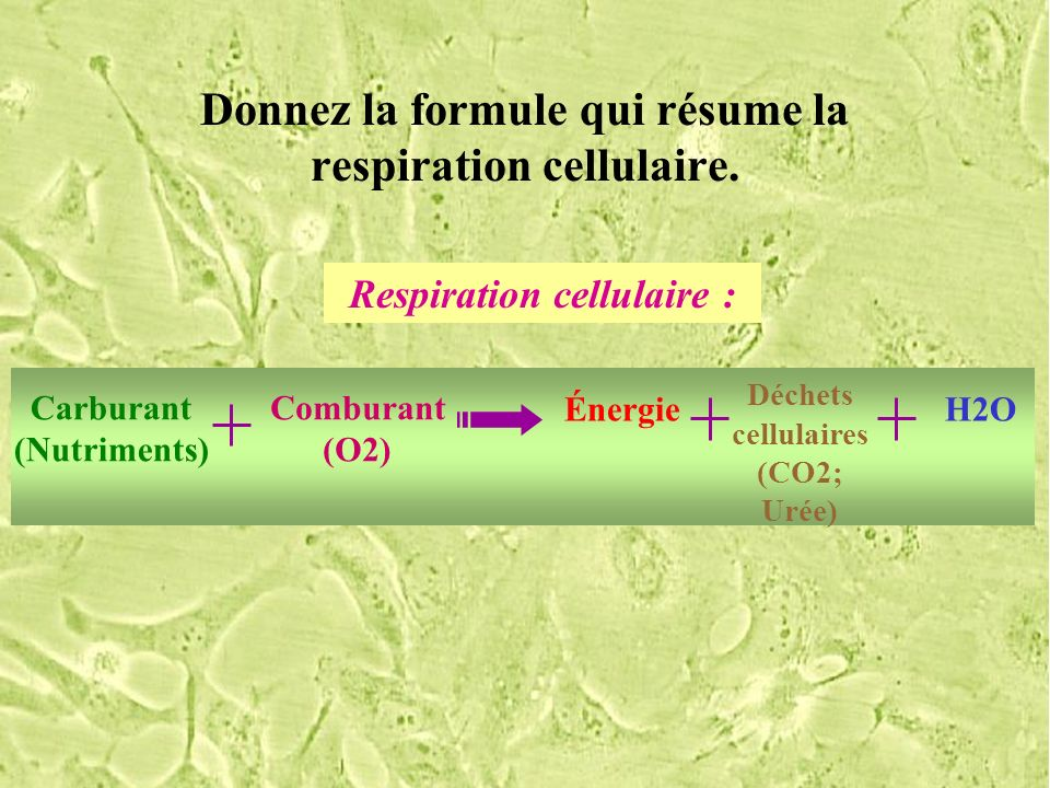 Donnez la formule qui résume la respiration cellulaire. Respiration cellulaire : Carburant (Nutriments) Comburant (O2) Énergie Déchets cellulaires (CO