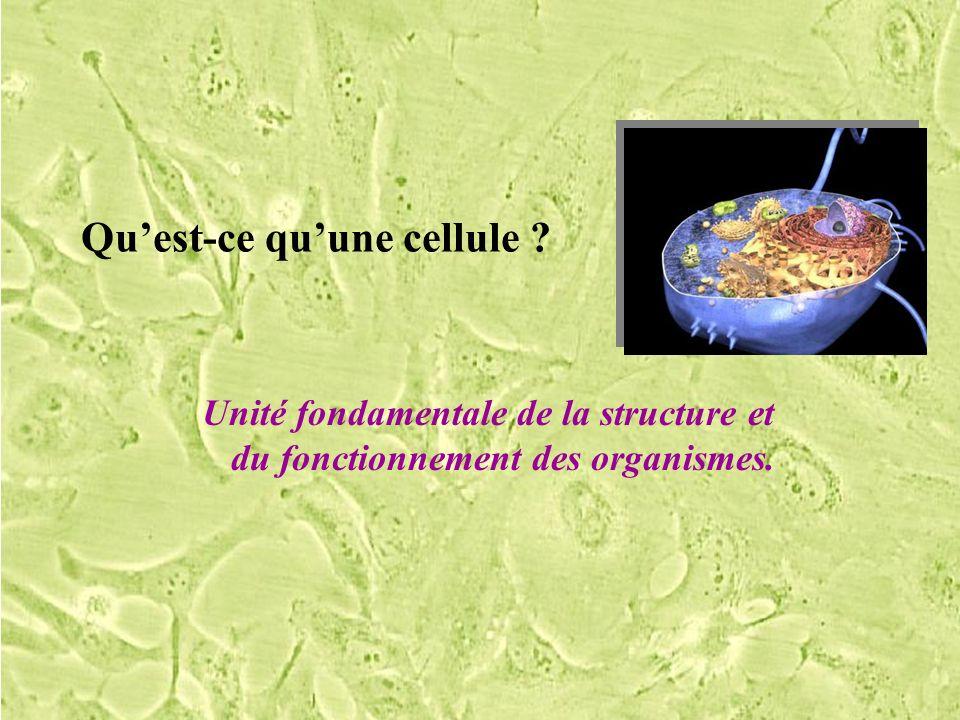 Quest-ce quune cellule ? Unité fondamentale de la structure et du fonctionnement des organismes.