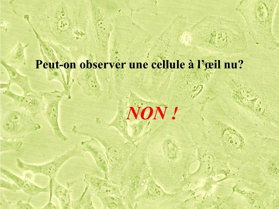 Peut-on observer une cellule à lœil nu? NON !