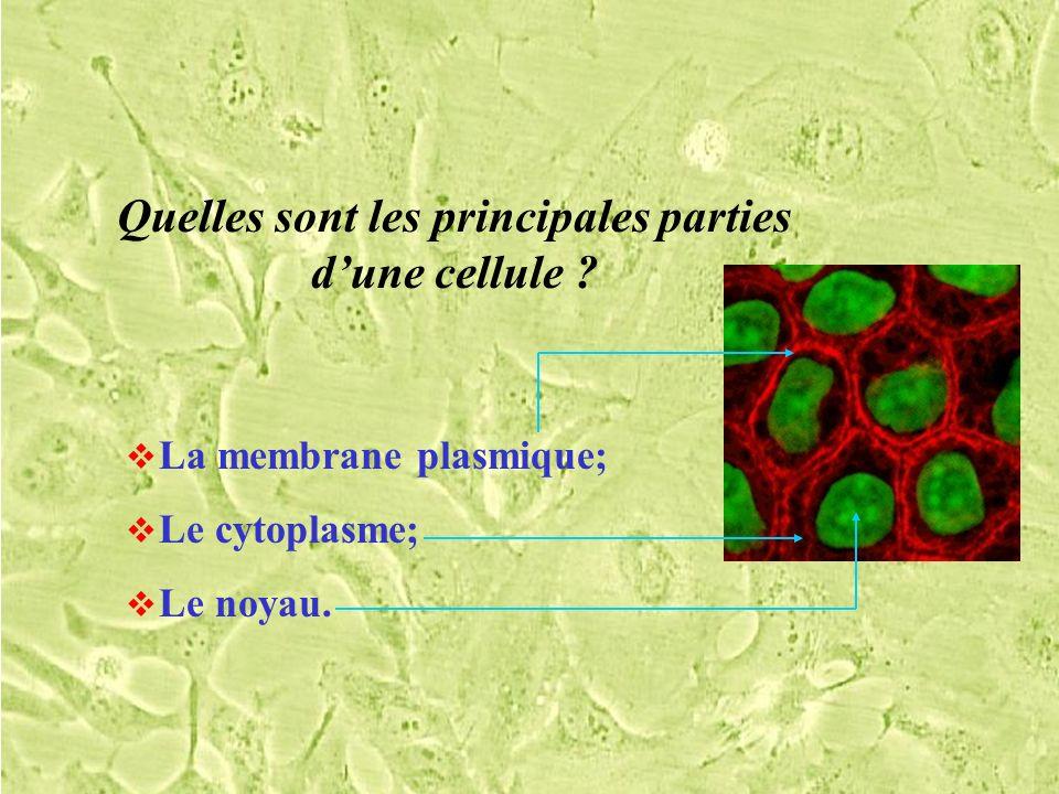 Que contient le cytoplasme dune cellule .Des organites .