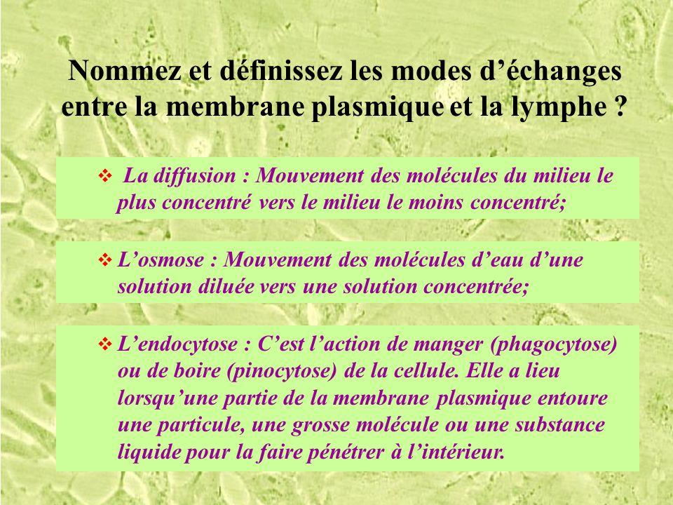 Nommez et définissez les modes déchanges entre la membrane plasmique et la lymphe ? Losmose : Mouvement des molécules deau dune solution diluée vers u
