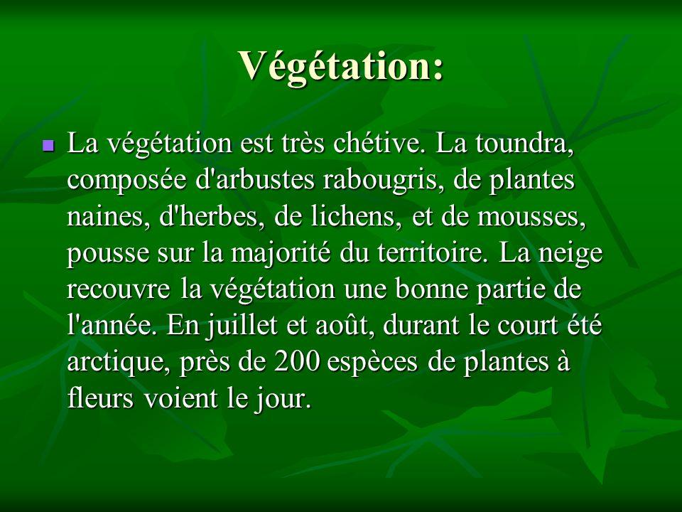Végétation: La végétation est très chétive. La toundra, composée d'arbustes rabougris, de plantes naines, d'herbes, de lichens, et de mousses, pousse