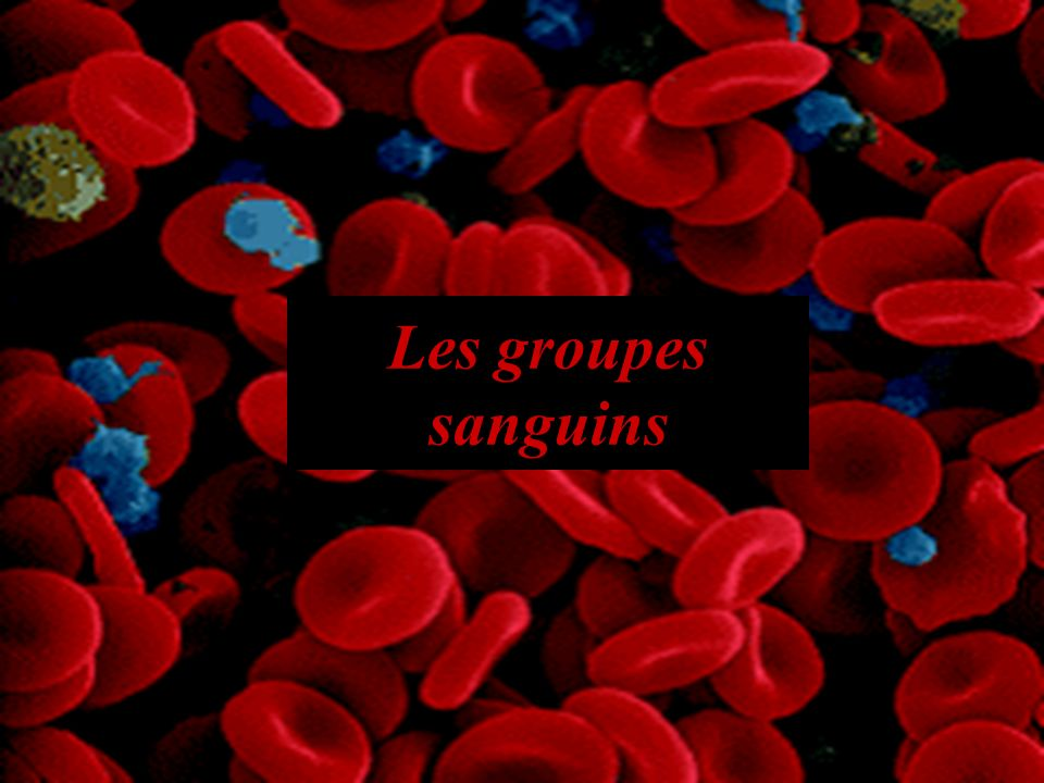 Introduction Le sang est un tissu liquide.