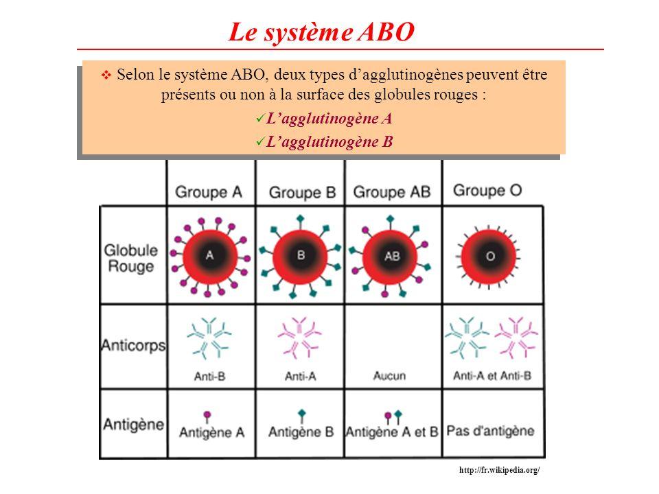 Le système ABO Selon le système ABO, deux types dagglutinogènes peuvent être présents ou non à la surface des globules rouges : Lagglutinogène A Laggl