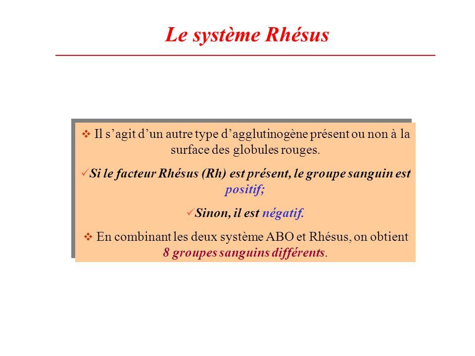 Le système Rhésus Il sagit dun autre type dagglutinogène présent ou non à la surface des globules rouges. Si le facteur Rhésus (Rh) est présent, le gr